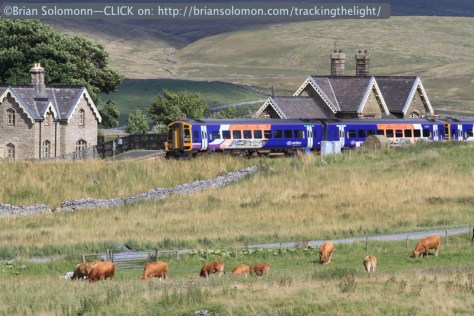 Ribblehead station with bovine all around.