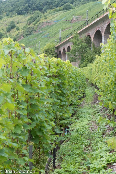The famous Hanging Viaduct looms above the vineyards like some ancient wall. Lumix LX7 photo.