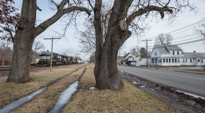 The Lovely Trees; Norfolk Southern/Pan Am Southern Intermodal Train at Shirley.