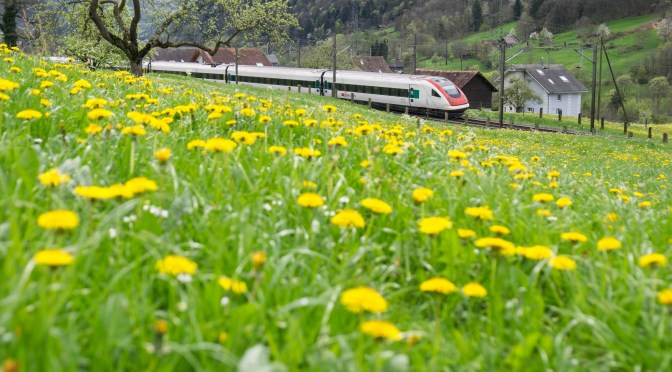 Springtime in Switzerland! SBB and Dandelions.