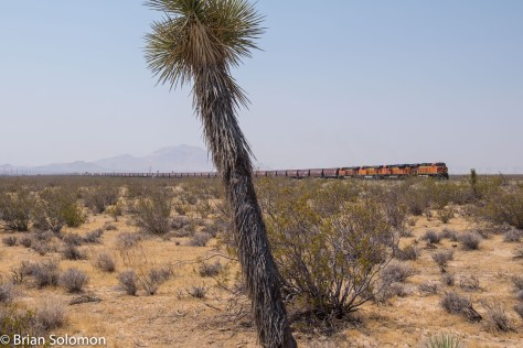 BNSF_earthworm_grain_train_Mojave_w_Joshua_Tree_DSCF0987