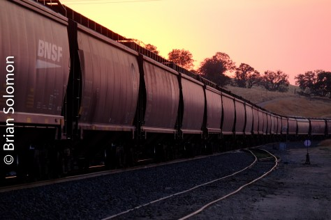 BNSF_earthworm_grain_cars_at_Bealeville_sunset_DSCF1364