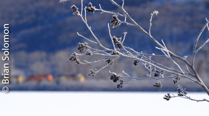 Frosty Branch, Brattleboro.