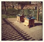 Very nice new national hives with WBC roofs at Newhall School Chelmsford - Beekeeper James Curtis