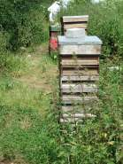 A sunny day in the apiary