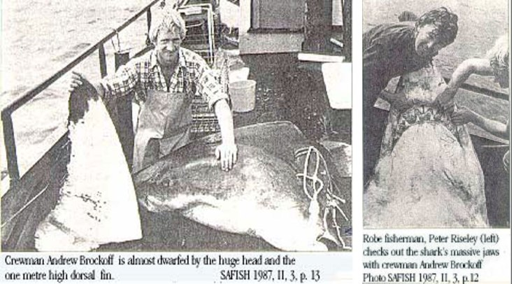 """KANGA"" the record Great White caught off Kangaroo Island, South Australia in 1987. The shark was so big they had to cut it into pieces to get it on board."