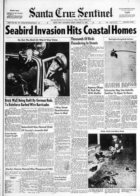 "Newspaper Headlines from 1961 ""Seabird Invasion"" in Capitola"