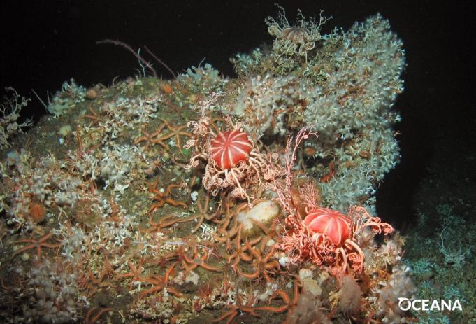 foorprint corals