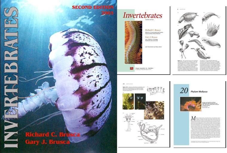 invertebrates brusca