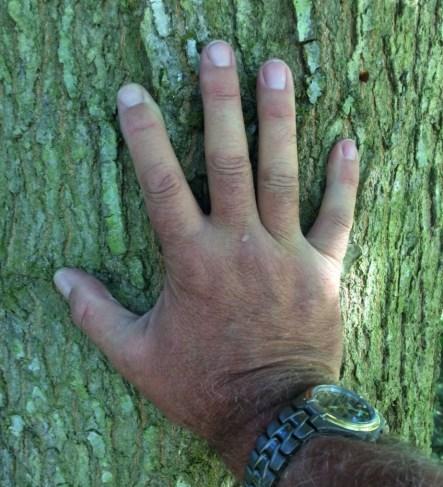 Tree-Hand