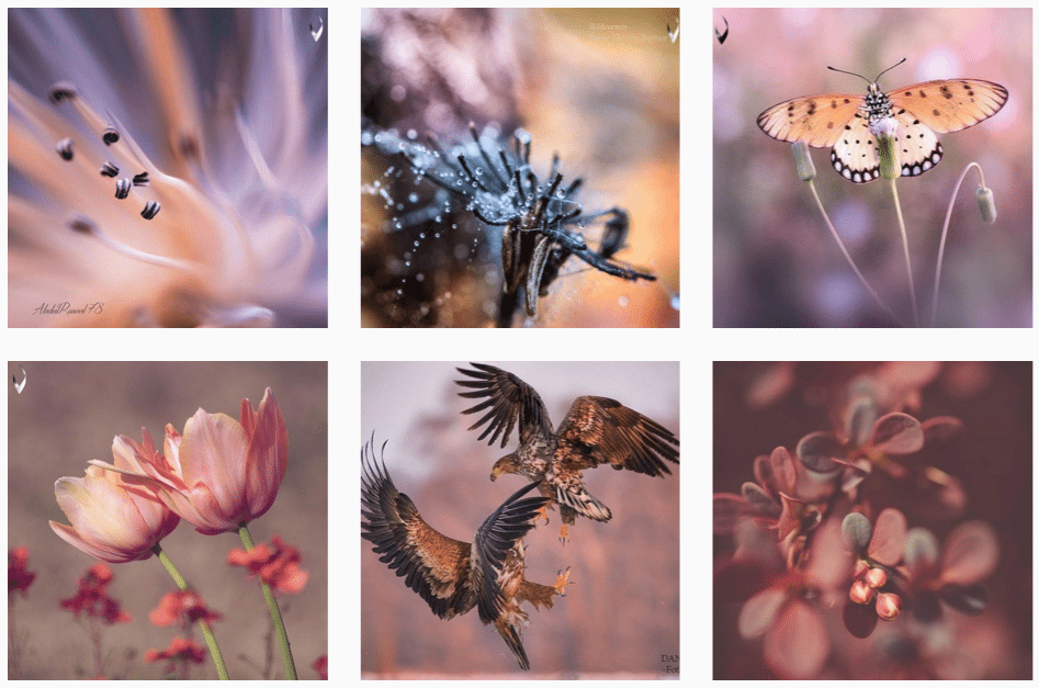 macro instagram feature accounts
