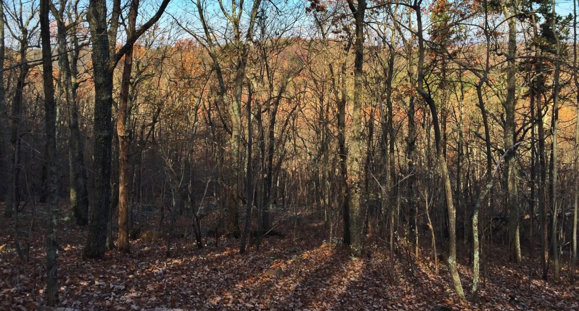 Trees on Crowders Mountain
