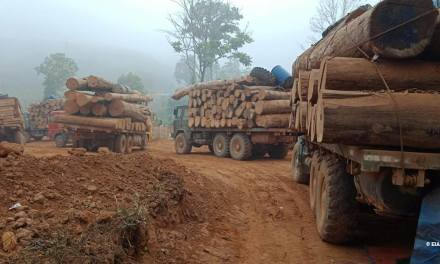 Myanmar: Environmental Investigation Agency alleges corruption in timber trade.