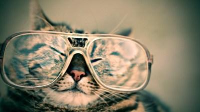 occhiali del gatto