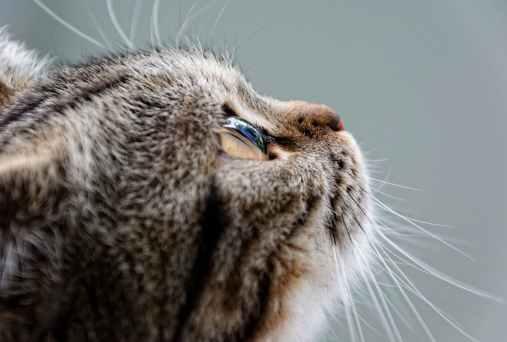 gatto - ritratto. guarda - luce