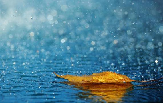 pioggia - foglia