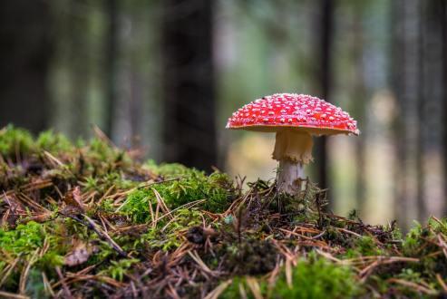 foresta - fungo
