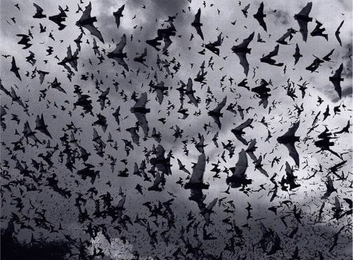flying_bats