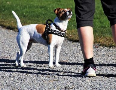 How to get started as a local dog trainer
