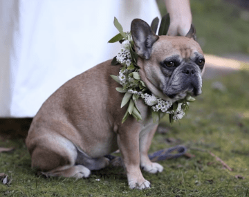 dog with floral wreath | wedding film by Grover Films
