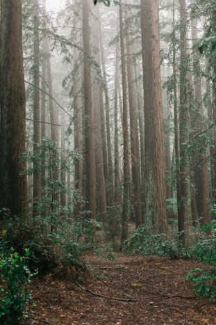 Colourful Redwoods Wedding in the Rain | Caitlin Turner Photography | Bridal Musings Wedding Blog 27