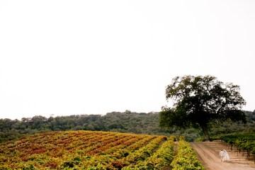 Harvest Winery Wedding by Brady Puryear 40