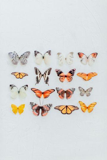Pretty Butterfly Inspired Wedding Ideas – Anja Schneemann Photography 38
