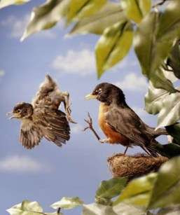 image of bird getting kicked out the nest