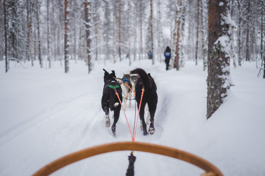 married in Lapland