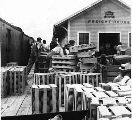 Shipping Watermelons 1932