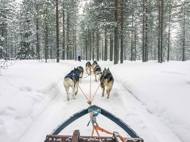 5-day Finland itinerary-Huskies
