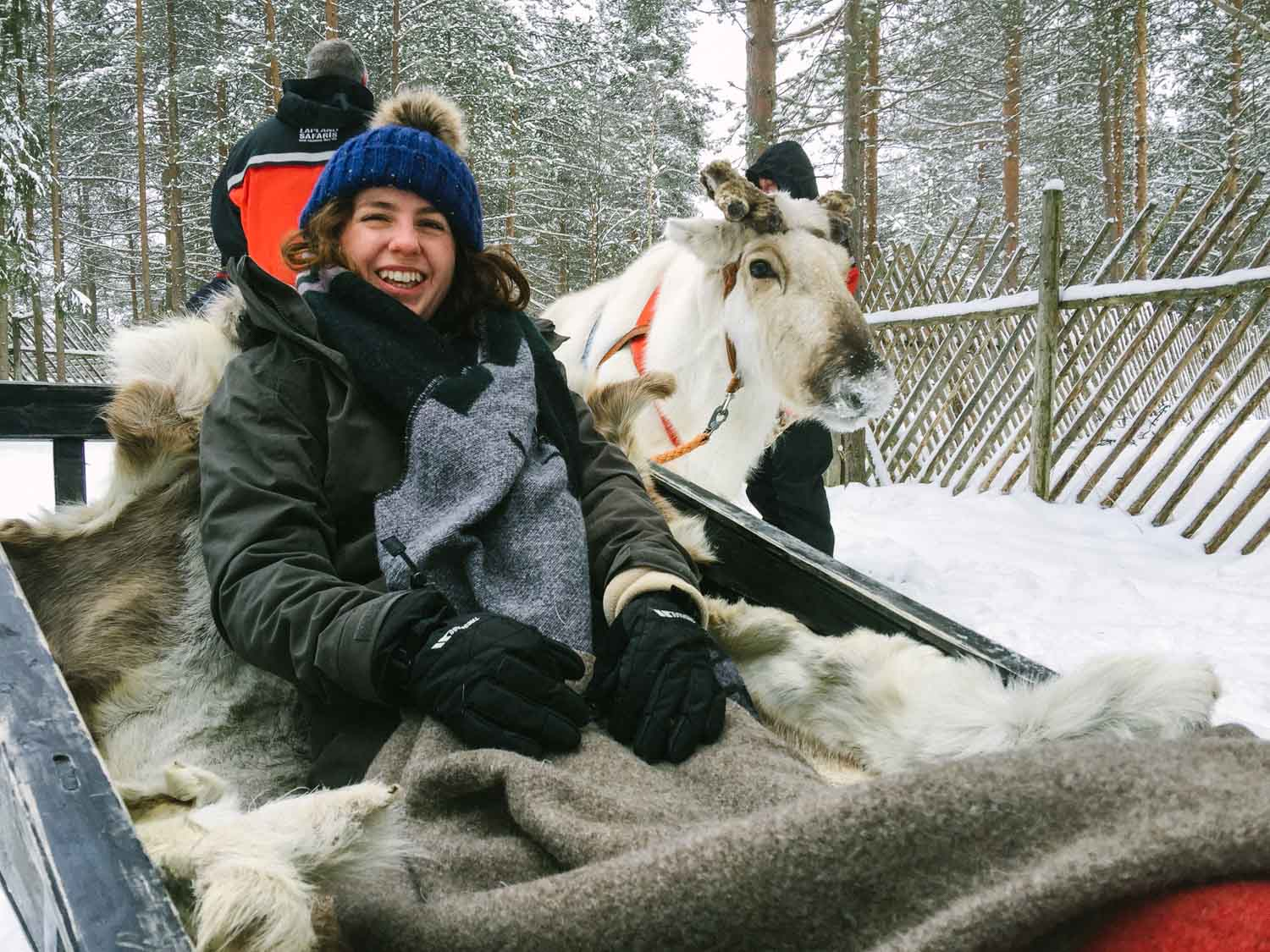 5-day Finland itinerary Northern Lights - Reindeer Farm