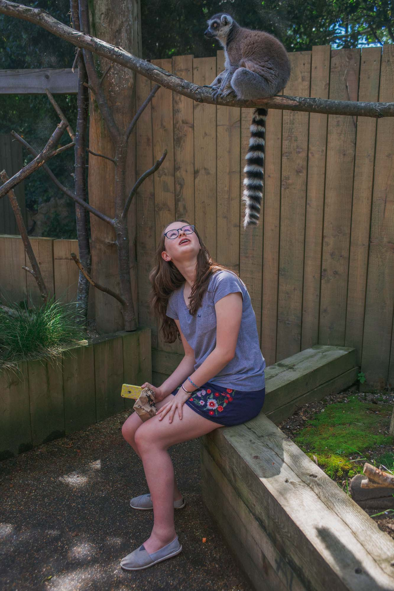 London Zoo ZSL - Sitting with the lemurs