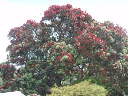 NZ Xmas tree