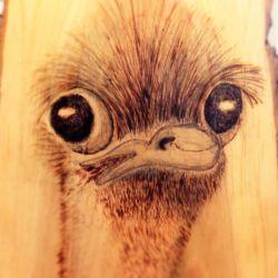 a baby ostrich