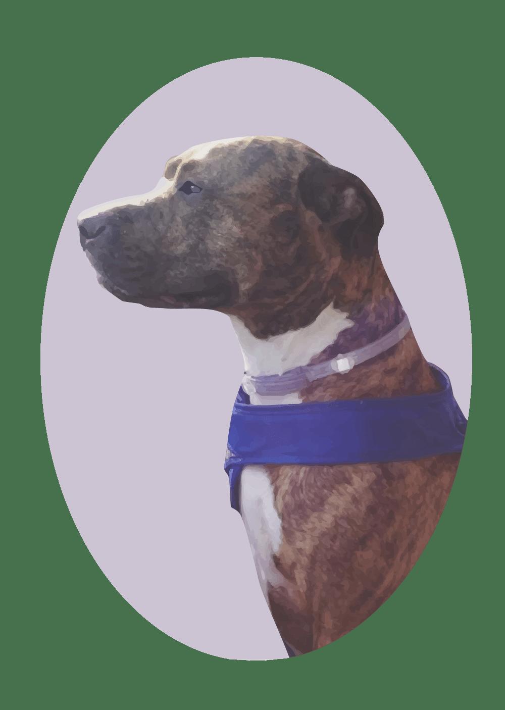lincoln - dog portrait