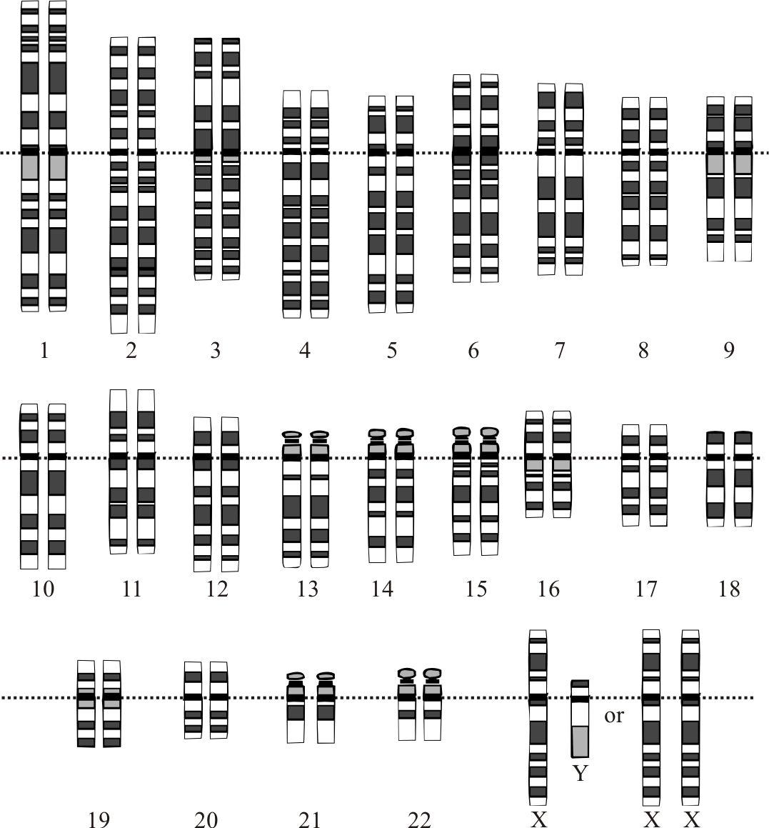 Dna And Genes Worksheet