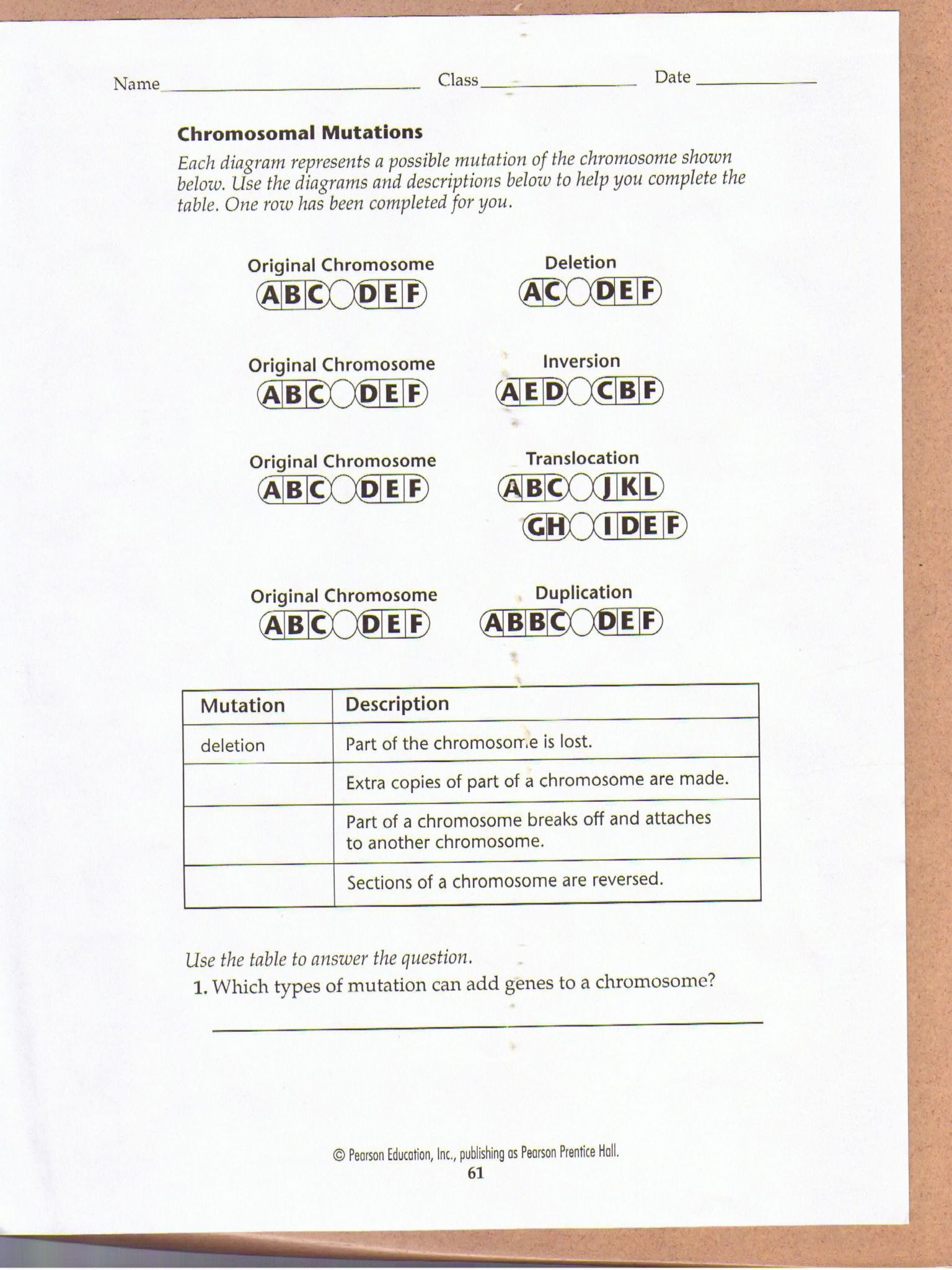 Dna Mutations Practice Worksheet Answer Key