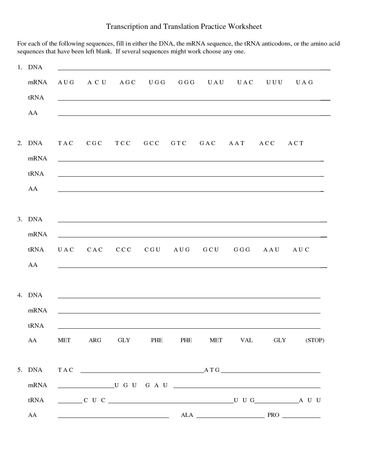 Dna Replication Practice Worksheet Answers