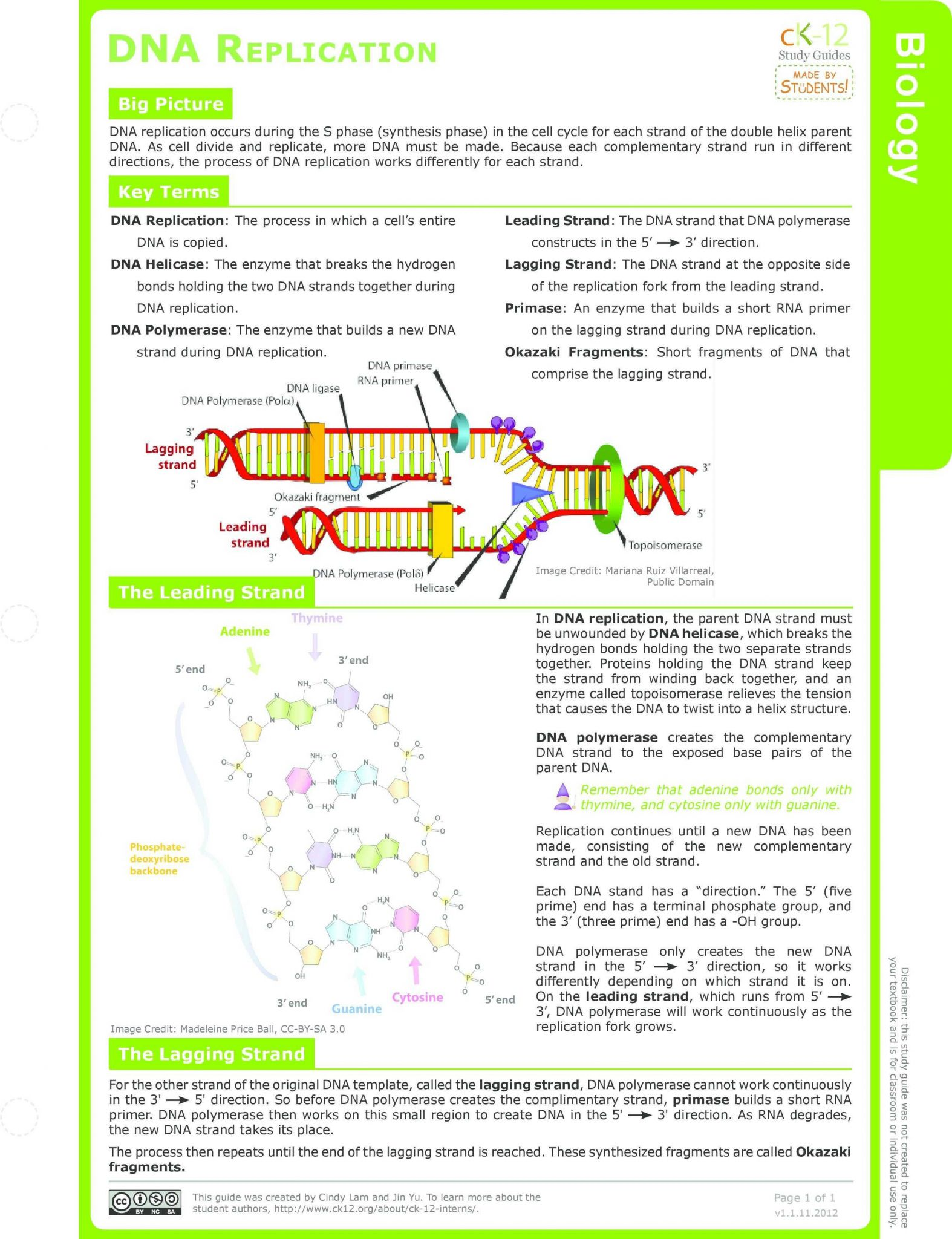 Dna Replication Worksheet Key