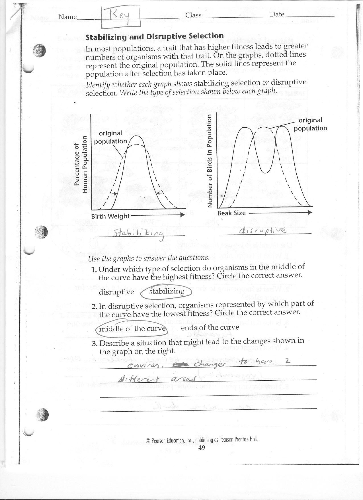 Dna Review Worksheet Answer Key