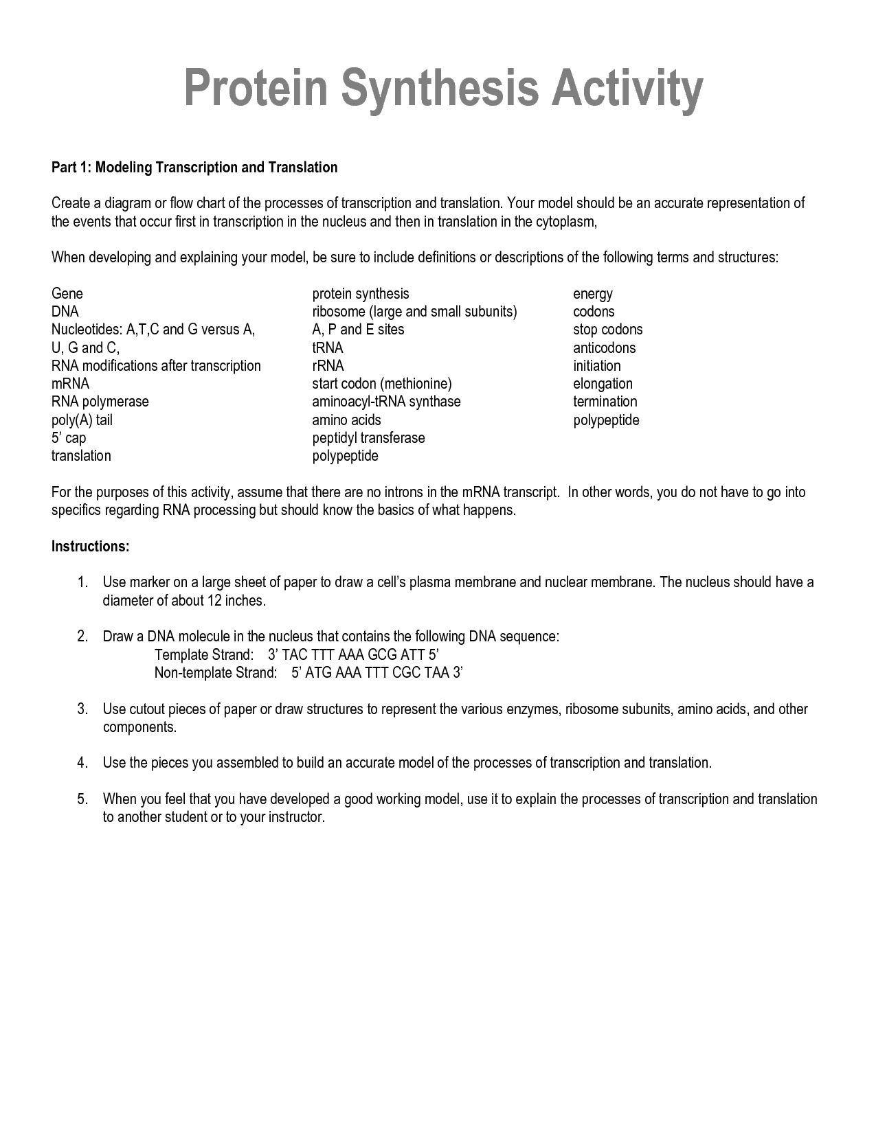 34 Protein Synthesis Diagram Worksheet