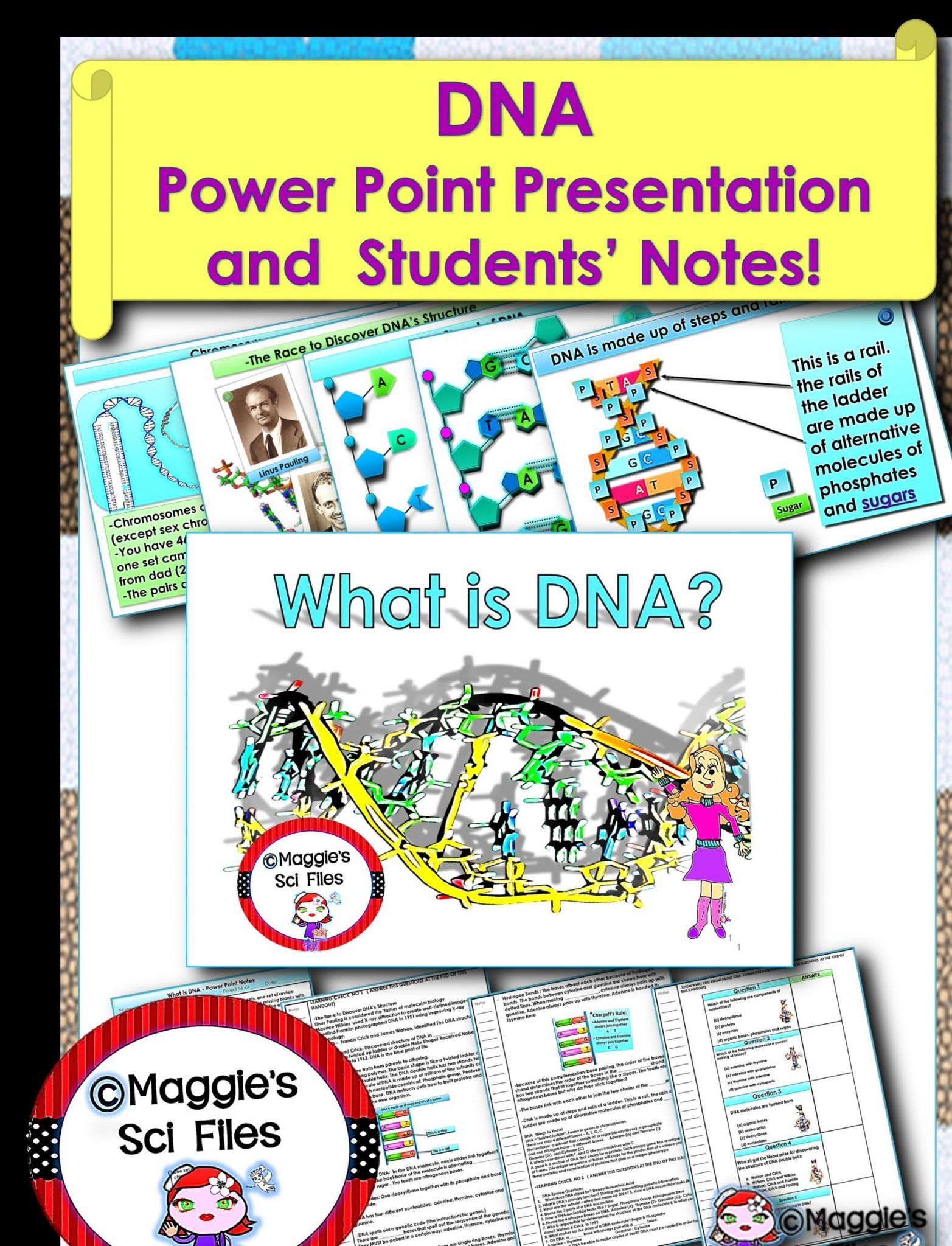 Dna Structure And Function Worksheet