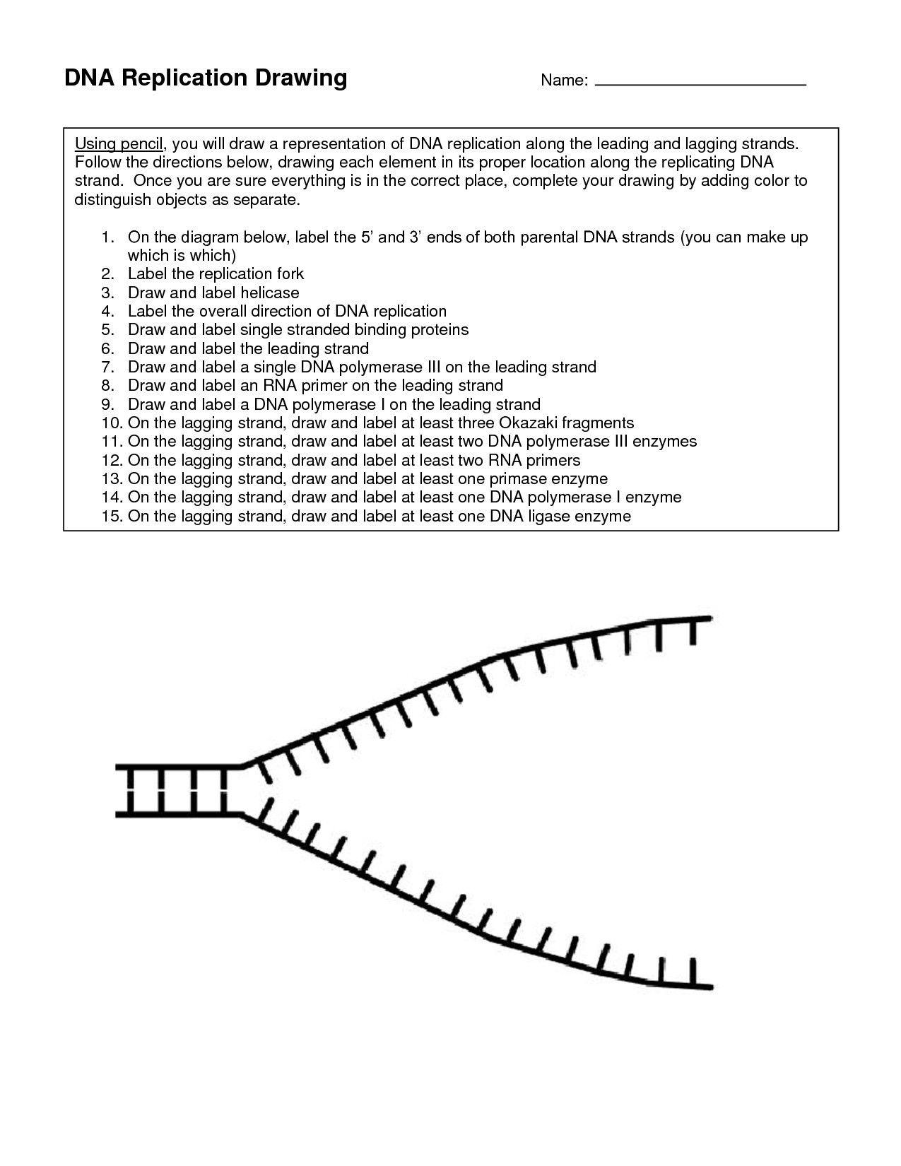 Dna Structure Quiz Worksheet