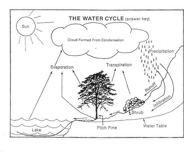 Fill In The Blank Water Cycle Diagram Worksheet