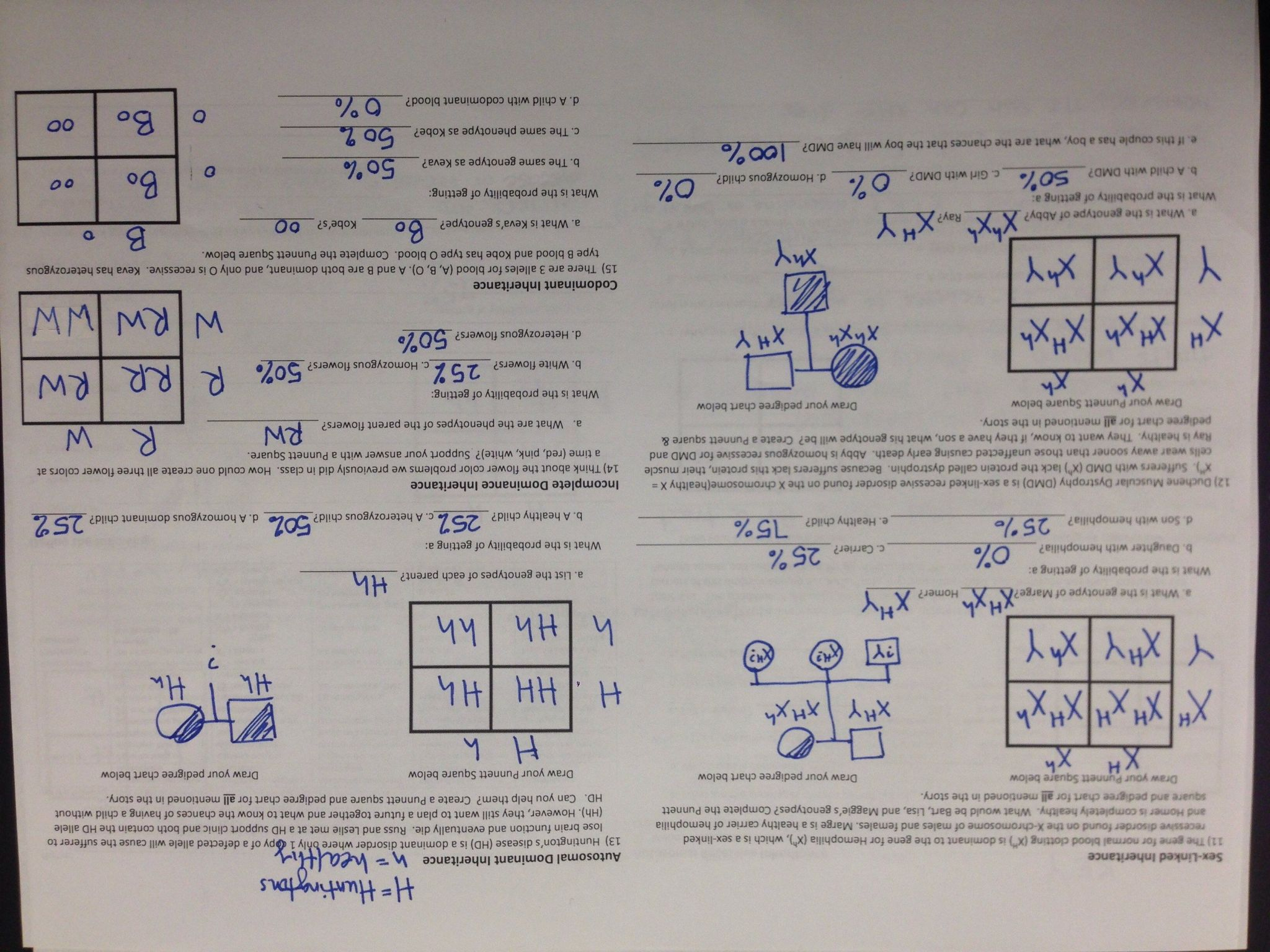 Genetics Problems Worksheet