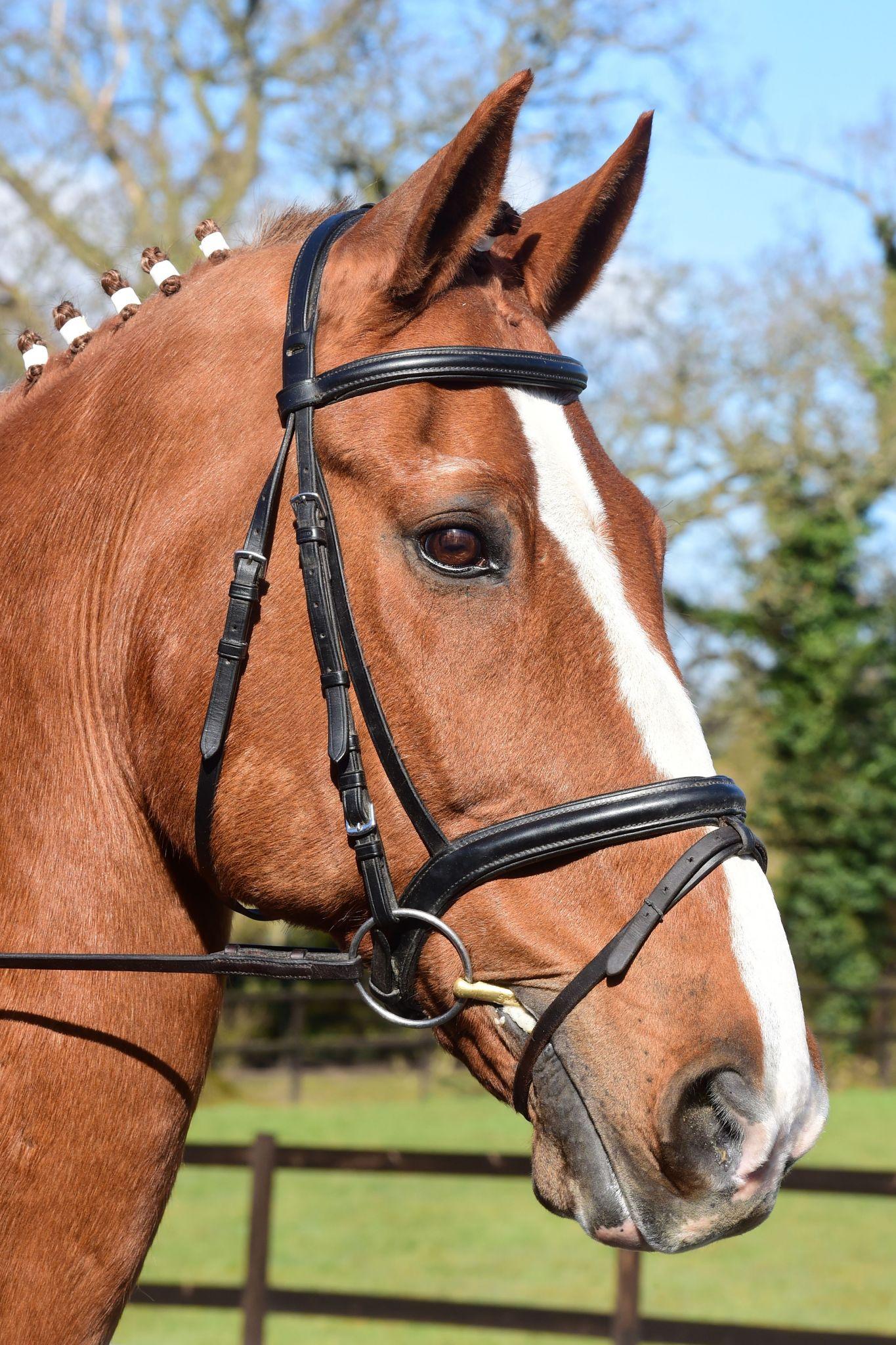 Horse Stable Management Worksheets