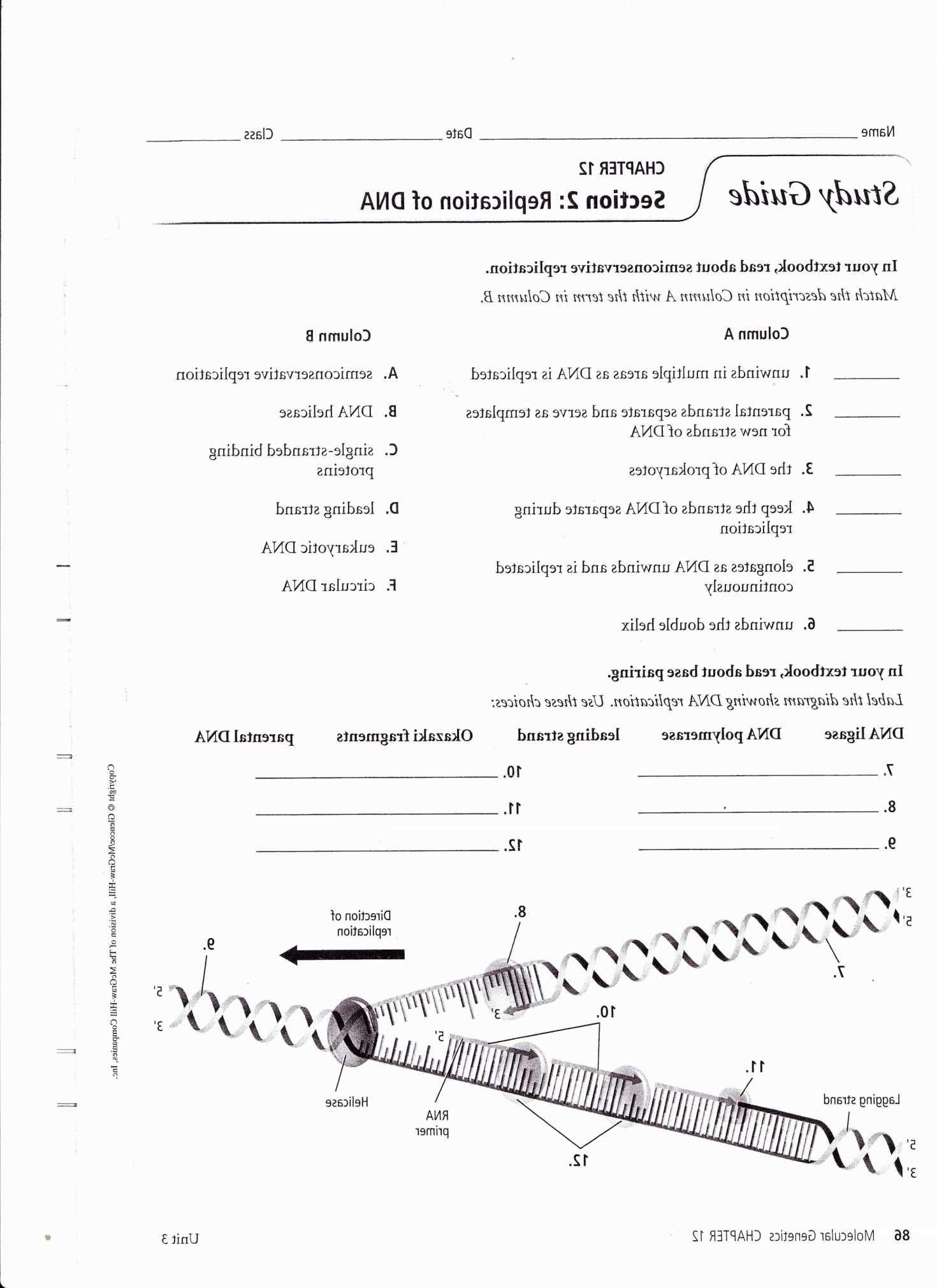 Human Inheritance Worksheet Answers