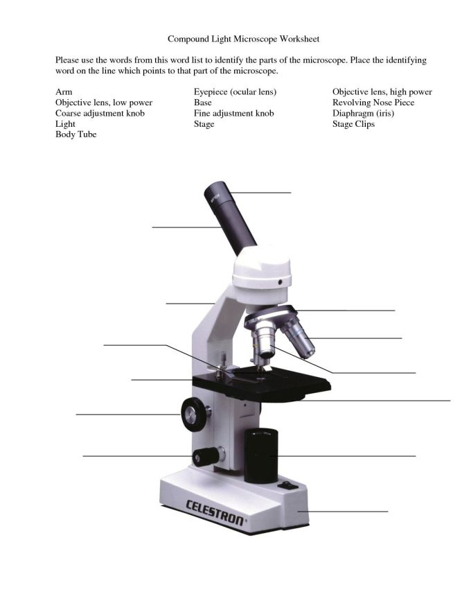 Parts Of A Microscope Worksheet - Promotiontablecovers