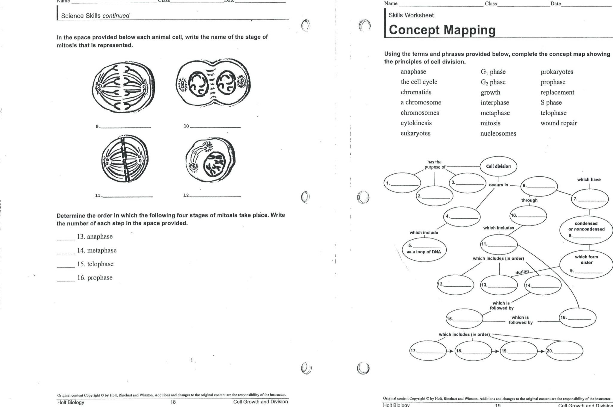 Skills Worksheet Concept Mapping Answers Holt Biology
